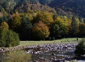 1_El bosque en Otoño