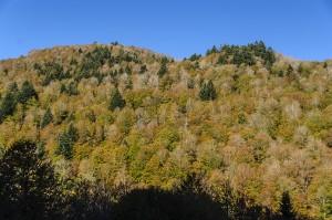 Bosque Sansanet